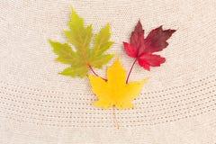 Maple Leaves on Wool Stock Image