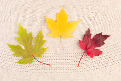 Maple Leaves on Wool Stock Photos