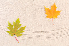 Maple Leaves on Wool Stock Photography
