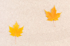 Maple Leaves on Wool Royalty Free Stock Photography