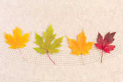 Maple Leaves on Wool Royalty Free Stock Photo
