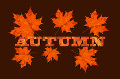 Maple leaves on word autumn, autumn theme vector Stock Images