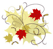 Maple Melody Royalty Free Stock Images