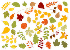 Maple, oak, birch, linden and herbs leaves Royalty Free Stock Photos