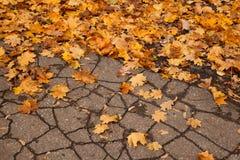 Maple and oak leaves on wet asphalt Royalty Free Stock Photo
