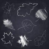 Maple. Oak. Poplar. Chalk drawn tree leaf on chalkboard background. Maple. Oak. Poplar. Set of chalk drawn tree leaves on chalkboard background. Sketch of vector illustration