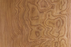 Maple panel. With wide grain for background Royalty Free Stock Photos