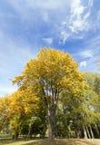 Maple Park in autumn Stock Photography