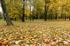 Maple Park in autumn Royalty Free Stock Images