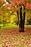 Autumn colors in city park. Autumn season in a quiet day without people in a park with a lot fallen leaves on the ground in a cloudy day with flat light royalty free stock image