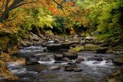 Maple River Stock Photo