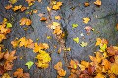 Maple rocks Royalty Free Stock Photography