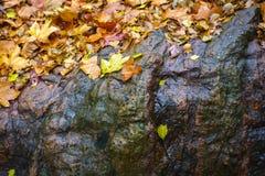 Maple rocks Royalty Free Stock Photo