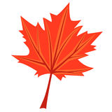 Maple's leaf Royalty Free Stock Photo