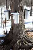 Maple Sap Buckets Royalty Free Stock Image