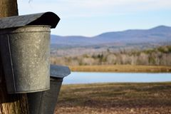 Maple sap buckets Stock Photo