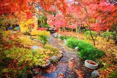 Maple season at fall, Japan Royalty Free Stock Images