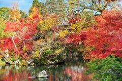 Maple season at fall, Japan Royalty Free Stock Photo