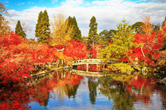 Maple season at fall, Japan Royalty Free Stock Photography