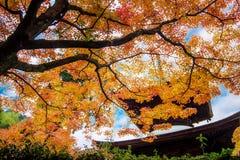 Maple season at fall, Japan Stock Images
