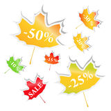 Maple stickers Royalty Free Stock Images