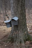 Maple sugar buckets. Hanging on a maple tree Royalty Free Stock Photography