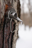 Maple Sugar Tap in Tree Royalty Free Stock Photography