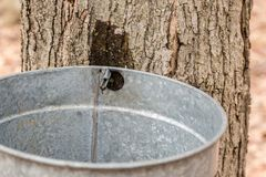 Maple sugaring. Stock Photos