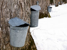 Maple Sugaring Time Royalty Free Stock Photos