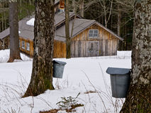 Maple Sugaring Time - Sugar House and Pails. Late winter is maple sugaring time in Vermont, sugar maples are tapped with spouts when the sap starts to rise up royalty free stock image