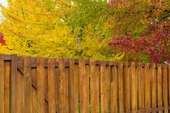 Trees by Backyard Wood Fence in Fall Colors Royalty Free Stock Image