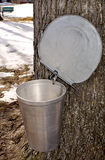 Maple syrup bucket Royalty Free Stock Image