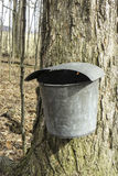 MAPLE SYRUP BUCKET WITH LID Stock Photo