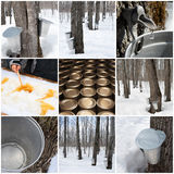 Maple syrup production. In Quebec, Canada. Spring forest and buckets for collecting maple sap Royalty Free Stock Photography