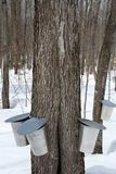 Maple syrup production, springtime Royalty Free Stock Images