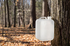 Maple Syrup Tapping Using a White Collection Bottle Stock Images