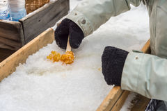 Maple taffy on snow in Montreal. Quebec, Canada Royalty Free Stock Photos