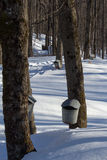Maple taps and buckets. Maple sugar taps and buckets in Vermont royalty free stock photography