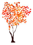 Maple tree. Beautiful maple tree with red foliage on a white background Royalty Free Stock Photo