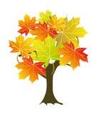 Maple tree vector illustration