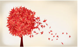 Maple tree. Leaves droping in the air Stock Image