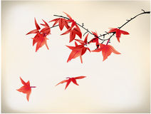 Maple tree. Leaves droping in the air Royalty Free Stock Image
