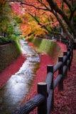 Maple tree along the canal in Kitano Tenmangu garden, Kyoto, Japan stock photography