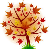 Maple tree autumn leaf fall. Maple tree autumn red leaf fall Royalty Free Stock Photo