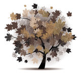Maple tree, autumn leaf fall Royalty Free Stock Photography