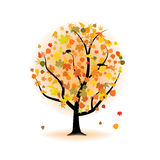 Maple tree, autumn leaf fall. Stock Photos