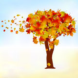 Maple tree, autumn leaf fall. EPS 8 Royalty Free Stock Image