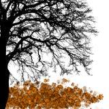 Maple tree, autumn leaf fall, illustration. Stock Photo