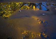 Maple tree in autumn reflected in puddle Royalty Free Stock Photos