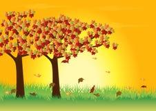 Maple tree. In autumn season vector illustration